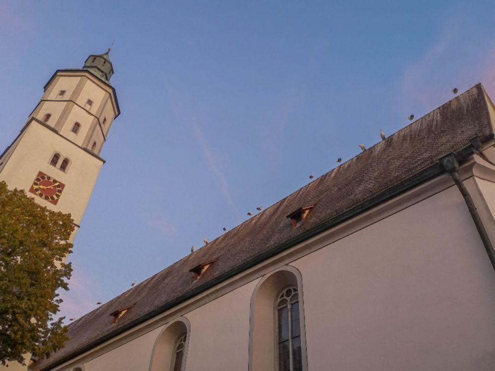 15 Störche auf dem Kirchendach